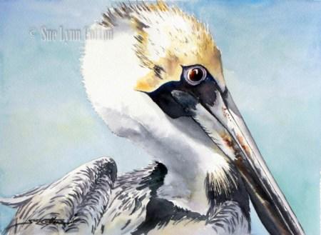 Brown Pelican Closeup