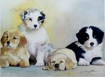 Guide Puppies