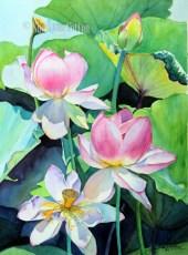 Lotus in the Sunlight $110