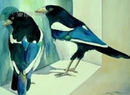 Magpies Peering $88