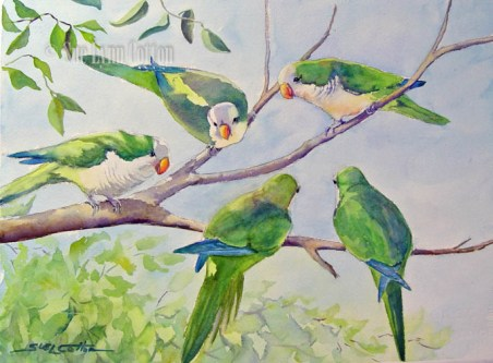 Monk Parakeets on a Branch $99