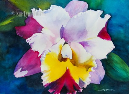 Orchid with Multi Colors $99