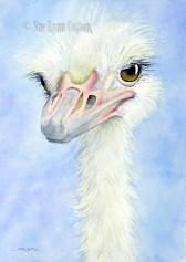 Ostrich $99