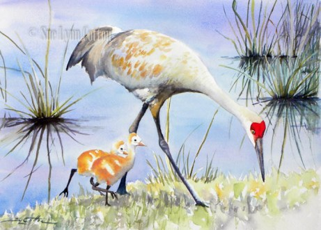 Sandhill Crane New Chicks $99