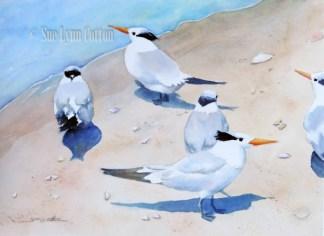 Sandwich Terns on the Beach $88