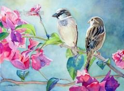 Sparrows in the Bouganvillea $99