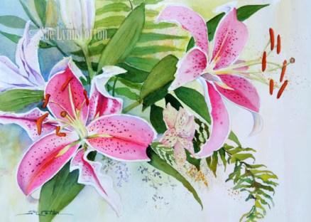 Stargazer Lilies $99