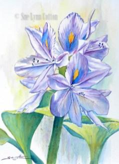 Water Hyacinth $99