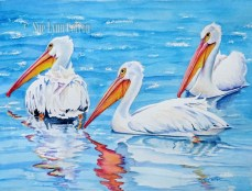 White Pelicans Swimming $99