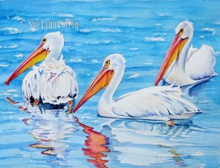 White Pelicans Swimming $99