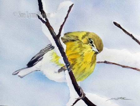 Yellow Warbler $99