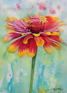 Zinnia in Red and Yellow $99