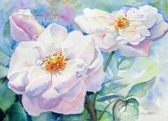 Pink English Rose $195