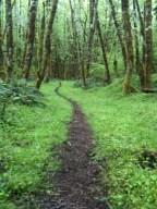 Santiam Rainforest
