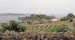 Fira Garden