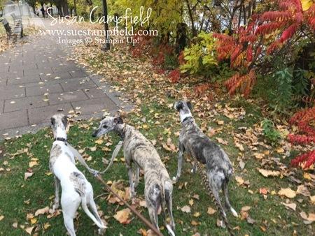 Minneapolis Fall Dog Walk - 1 (1)