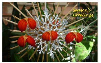 Happy Christmas to all members, their families and followers of our web page.