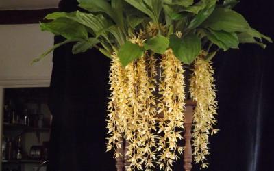 Bill Haldane's Recently Flowering Plants