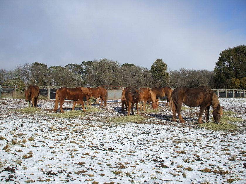 Winter, with a light dusting of snow in the Southen Tablelands of NSW