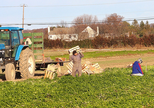 Farm-Workers