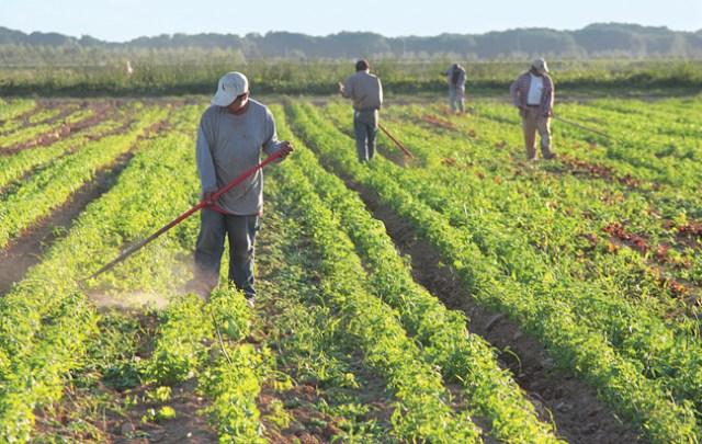 R090309_Farmworkers_BE_C.jpg