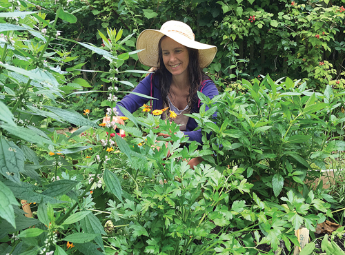 New Suffolk herbalist Heather Cusack trims herbs last Thursday in a garden at Peconic Land Trust in Cutchogue. Ms. Cusack, who is currently leading community workshops about herbs, says the plants are useful for more than just cooking. (Credit: Rachel  Young photos)