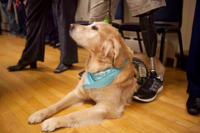 Benjamin the golden retriever accompanied Joseph Worley, an Iraq veteran, to the Veterans Day ceremony at Southold's American Legion post. (Credit: Chris Lisinski)