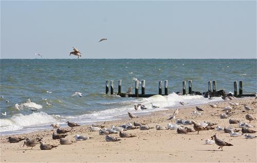 This weather is for these birds in Jamesport. (Credit: Barbaraellen Koch)