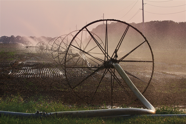 BARBARAELLEN KOCH PHOTOA farmfield being irrigated on Herricks Lane in Jamesport Monday evening. Farmer John Kujawski said that they had just fumigated it and needed to irrigate it because it has been so dry- it will help the potato crop next year.