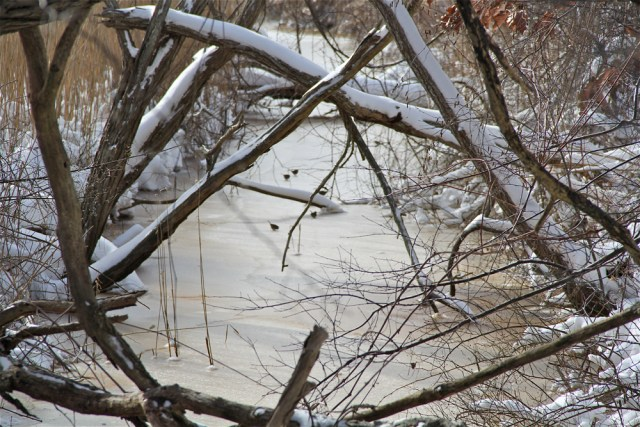 Birds playing on the ice in a Orient tributary of Main Road.