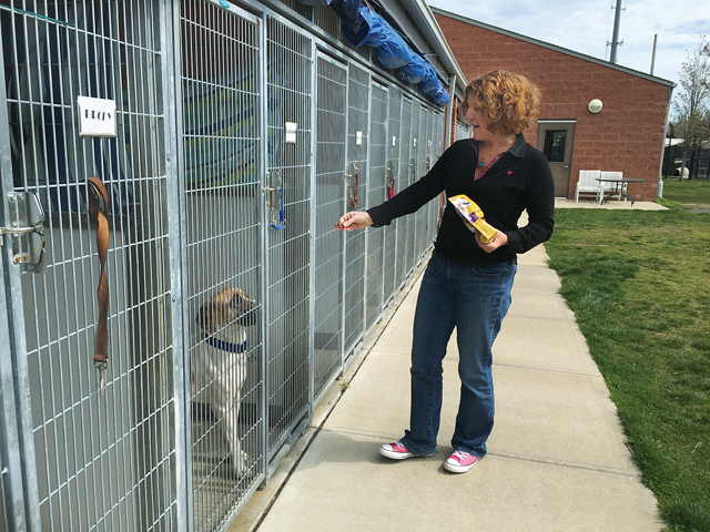 Gillian Wood Pultz, executive director of North Fork Animal Welfare League, hands a treat to Batman, a dog being cared for at the shelter while his owner's housing situation is being sorted out. (Credit: Paul Squire)