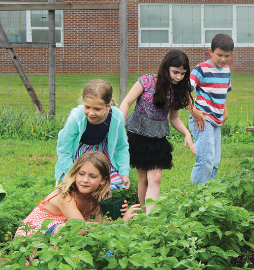 In the Southold Elementary School garden, students not only learn about science; they put their math skills into practice by measuring and planning the garden's layout. Since they also harvest and sell their produce, Suffolk County Executive Steve Bellone says he'd like to see similar programs implemented in other county schools. From left: second-graders Mae Dominy, Grace Zehil, Alyvia Apparu and Skylar Valderrama. (Credit: Carrie Miller photos)