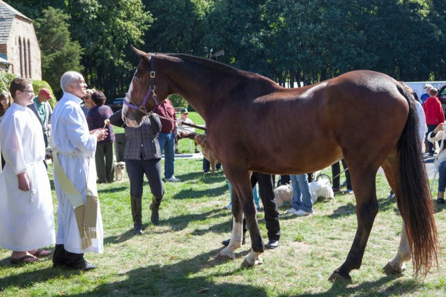 Snickers the horse dwarfs everyone around him as he receives his blessing. (Credit: Katharine Schroeder photos)