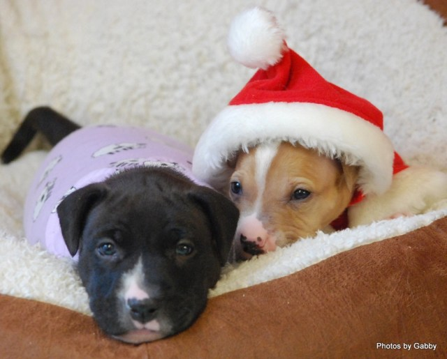 Cricket (left) and Ralphie before being adopted. (Credit: Gabby Glantzman)