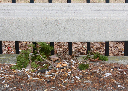 Discarded cigarettes under a bench outside the entrance to the criminal courts building in Riverside. (Credit: Barbaraellen Koch)