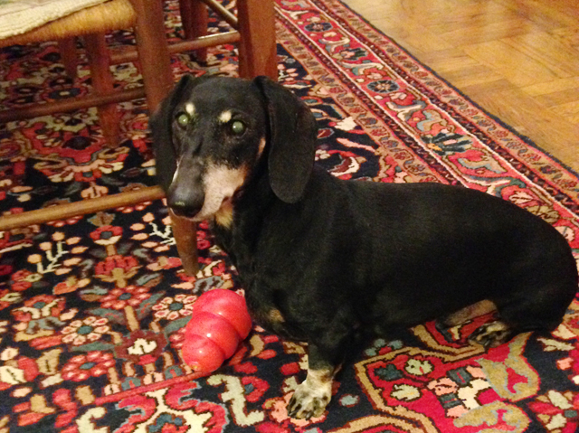 Hudson, a 12-year-old dachshund, died last April. (Credit: Charity Robey)