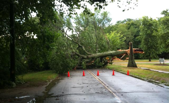 tree down peconic lane