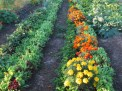 garden2