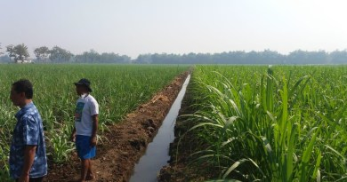 Prediction Sugar And Cane Production On Indonesia In 2019