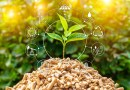 UK Government to Issue New Biomass Strategy in 2022
