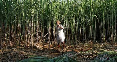 India's ethanol plan could drive a sugar bull market