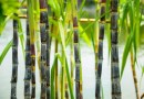 Louisiana courts energy startup that converts sugar cane waste to biofuel