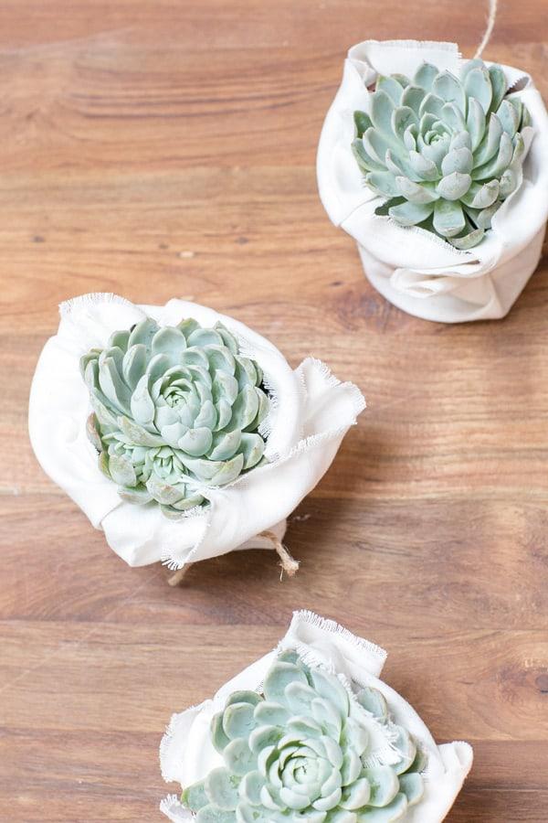 Succulents11