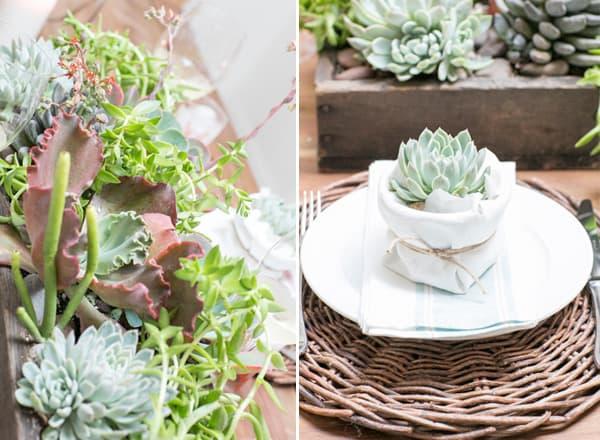 Succulents12