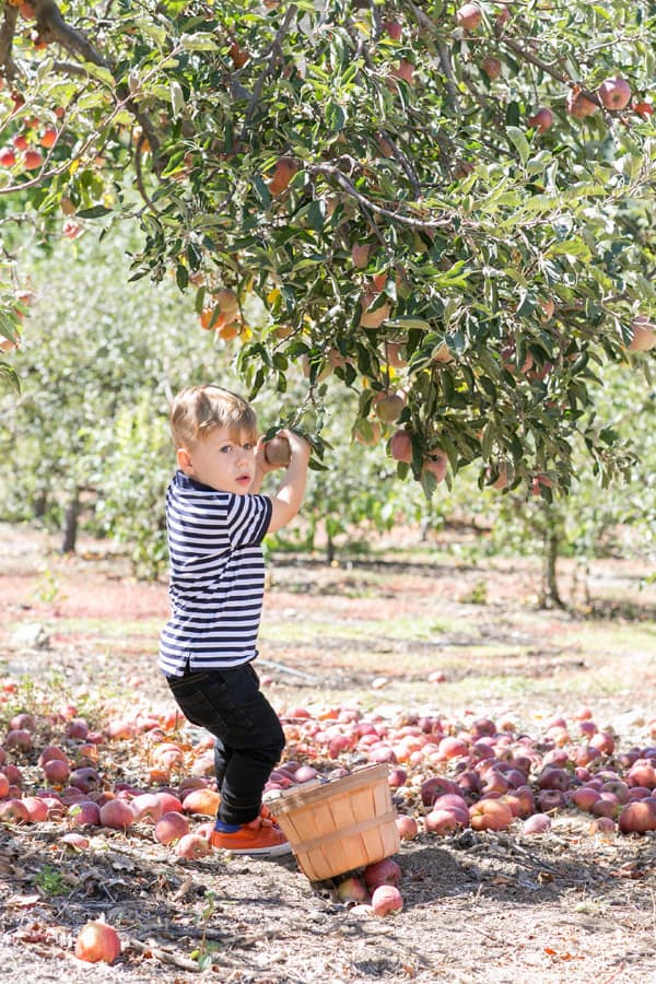ApplePicking_14