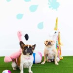 DIY Pool Float Costume For The Pups
