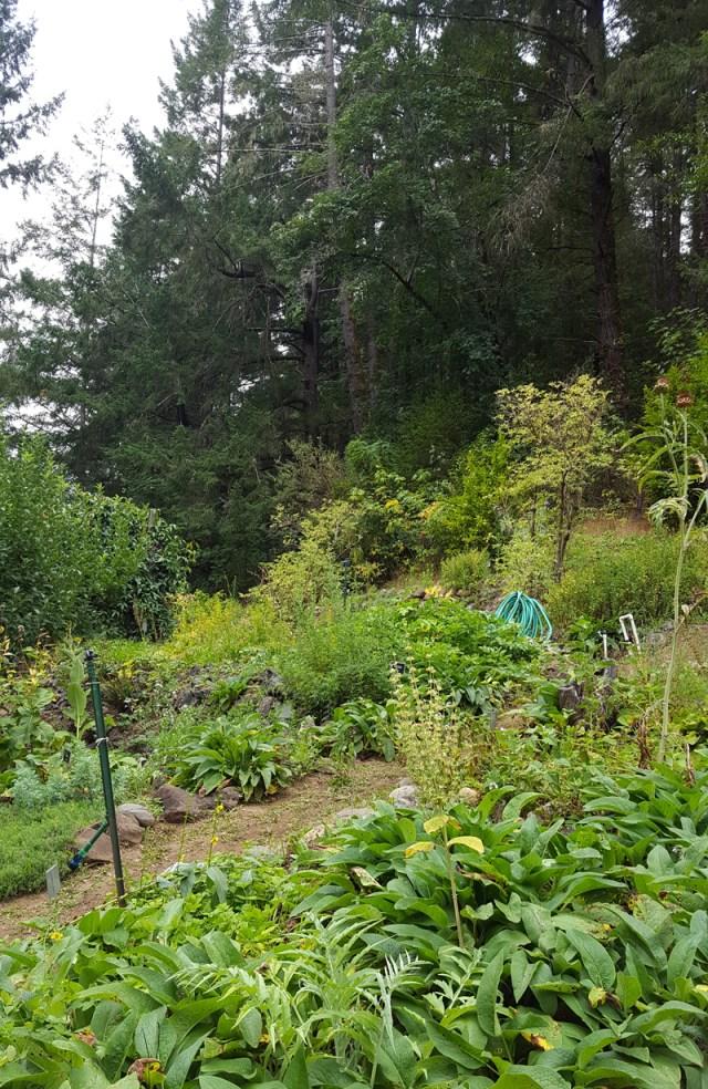California School of Herbal Studies garden in the woods