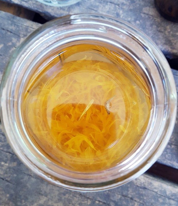 Sugar and Pith, picture from top looking into jar of unfiltered calendula tincture
