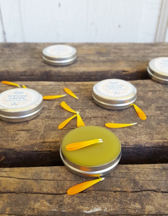 Sugar and Pith, Mini Wound Salve, tiny open of wound salve in foreground, four in the background with lids on, all on a rustic wood surface strewn with calendula petals.