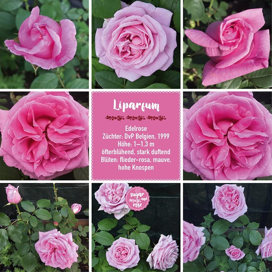 Liparfum